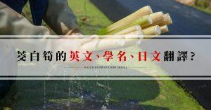 茭白筍的英文、學名、日文翻譯