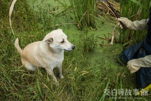 狗狗可以吃茭白筍嗎?