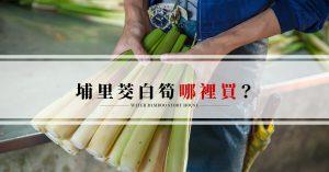 埔里特產茭白筍-埔里筊白筍哪裡買