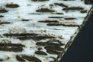 茭白筍黑點是好是壞?可以增加鈣質嗎?